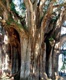 Uroczysty drzewo Fotografia Royalty Free