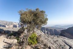 Uroczysty jar w Oman Zdjęcie Royalty Free