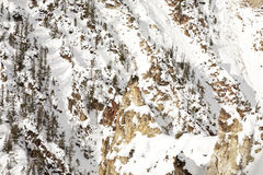 Uroczysty jar Yellowstone Obrazy Stock