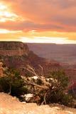 uroczysty jaru park narodowy usa Zdjęcie Stock
