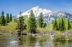Uroczysty Teton - grizzly Obraz Royalty Free