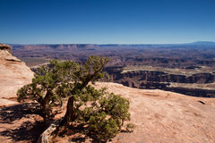 Uroczysty widoku punkt, Canyonlands Zdjęcie Stock