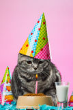 Urodzinowi koty Zdjęcia Stock