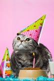 Urodzinowi koty Obrazy Stock