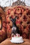 Urodzinowy świętowanie dla małego psa Obraz Stock