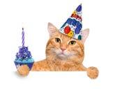 Urodzinowy kot Zdjęcie Royalty Free