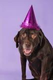 urodzinowy lab Obrazy Royalty Free