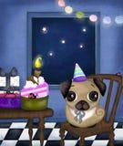 Urodzinowy mops Obrazy Stock
