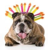 Urodziny pies Zdjęcie Royalty Free