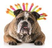 Urodziny pies Obrazy Royalty Free
