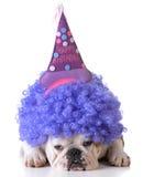 Urodziny pies Zdjęcia Stock