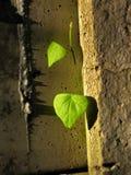 Urodzony na ścianie Fotografia Stock