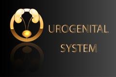 Urogenital system, kidneys, bladder, emblem, symbol, sign, stylized gold Stock Images