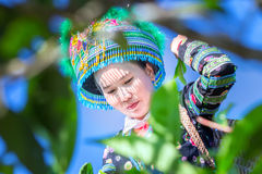 Urok kobiet zbieraczów herbaciany naród obraz stock