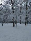 Urok zima zdjęcie stock