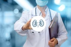 Urologist γιατρών παρουσιάζει το εικονίδιο με το νεφρό Στοκ Εικόνες