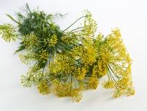 Urop floreciente en la tabla Fotografía de archivo