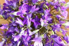 Urplebloemen Royalty-vrije Stock Afbeeldingen