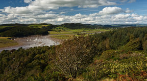 Urr vattenbred flodmynning Royaltyfri Fotografi