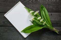 Ursinum y cuaderno del allium del ramson de la planta medicinal Fotografía de archivo