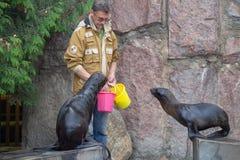 Ursinus du nord de Callorhinus de joint de fourrure dans le zoo de Moscou photos libres de droits