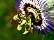 ursnygg blomma Arkivfoto