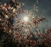 Ursnygg cirkel av den ljusa reflexionen Arkivbilder