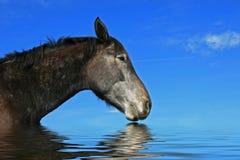 ursnygg häst Arkivfoto