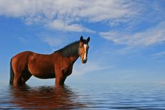 ursnygg häst Arkivfoton