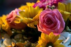Ursnygg rosa ros i solskenet royaltyfri bild