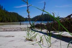 Ursnygg sandig strand med det stupade trädet och fotvandraren Arkivbild