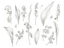 Ursnygg teckning av liljekonvaljdelar - blomma, inflorescence, stam, sidor Blommande växthand som dras i tappning vektor illustrationer