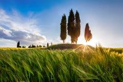 Ursnygg Tuscany solnedgång Fotografering för Bildbyråer