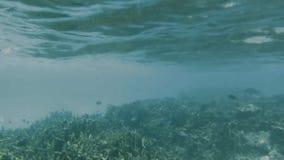Ursnygg undervattens- sikt av rever för röd korall och olika fiskar Turkosvatten av Indiska oceanen stock video