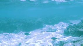 Ursnygg undervattens- sikt av rever f?r r?d korall och olika fiskar Turkosvatten av Indiska oceanen arkivfilmer
