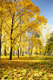 Ursnygg Yellow låter vara Paradis i djup höst Royaltyfria Bilder