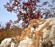 Ursnygga färger Arkivbild