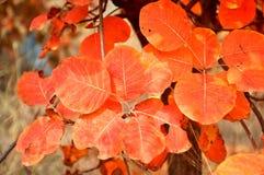 Ursnygga färger Royaltyfri Fotografi