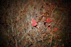 Ursnygga färger Royaltyfria Bilder