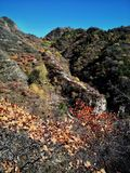 Ursnygga färger Arkivfoto