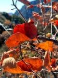 Ursnygga färger Fotografering för Bildbyråer