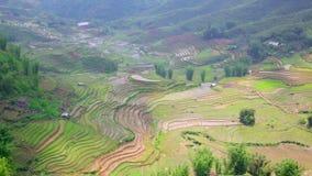 ursnygga lantgårdfält, risfält terrasserar, Sapa, Vietnam lager videofilmer
