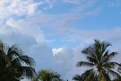 Ursnygga palmträd krönar på blå himmel, och vit fördunklar bakgrund bah royaltyfri fotografi