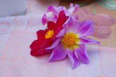 Ursnygga röda och lilablommor arkivbild