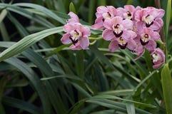 Ursnygga rosa orkidér i grönt gräs med naturligt ljus royaltyfri foto