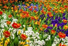 Ursnyggt fält av olika blommor i våren, solig trädgård, closeup, detaljer arkivbilder