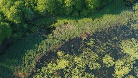 Ursnyggt flyg- upprättande skott av den georgiska fjärden, Ontario stock video