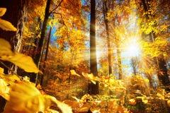 Ursnyggt höstsolljus i en skog arkivfoto