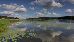 Ursnyggt naturlandskap p? en sommardag Gröna växter, spegelvattenyttersida och blå himmel med vita moln för snö stock video