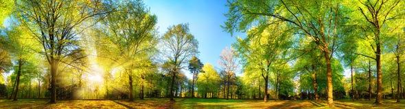 Ursnyggt panorama- vårlandskap med solbelysta träd fotografering för bildbyråer
